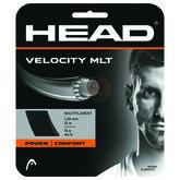 Head VELOCITY MLT 16 Gauge String - Natural